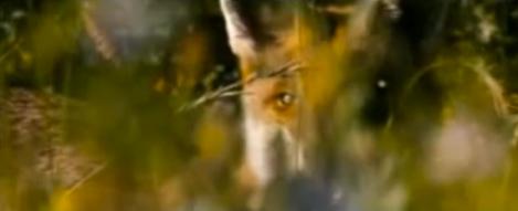 Fox and Child 4