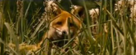 Fox and Child 5